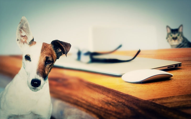 I diritti degli animali: prime necessarie informazioni.